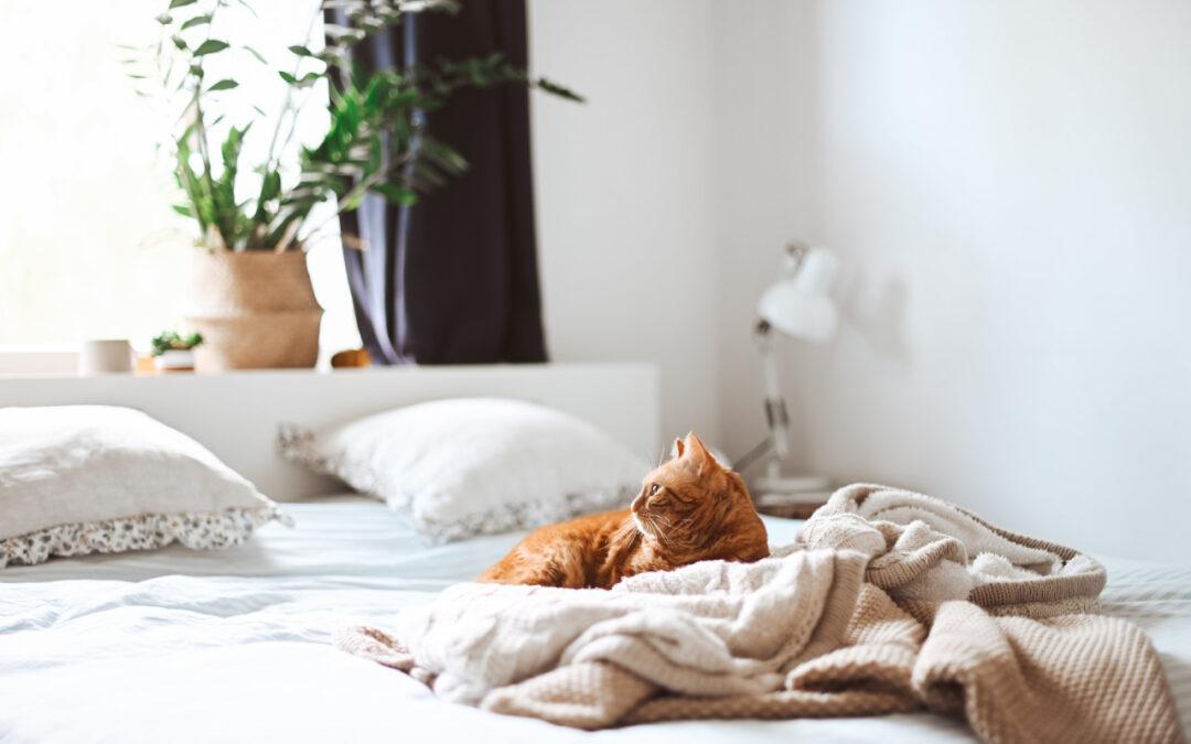 Dlaczego warto spać na materacu termoelastycznym Hilding Massage?